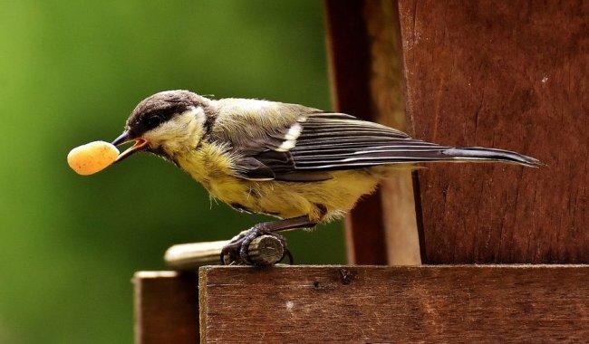 Atelier enfant: Fabrication de mangeoires à oiseaux