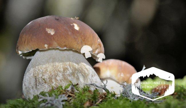 À la découverte des champignons