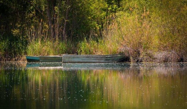 Atelier plantes sauvages & poissons du lac