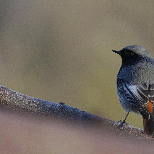 Observation de la migration des oiseaux au Col de Bretolet